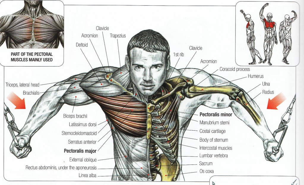Cable Exercises Fly Rope Curl Row