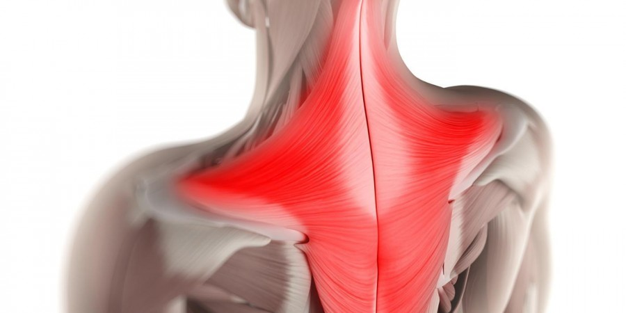 trapezius muscle structure