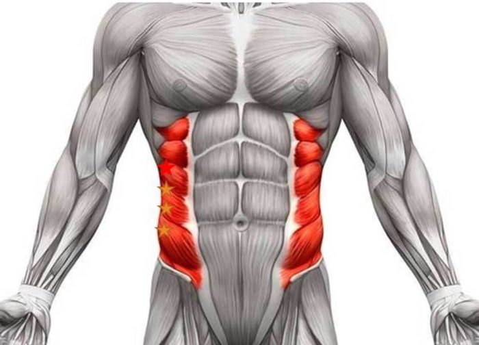 Abdominal obliques