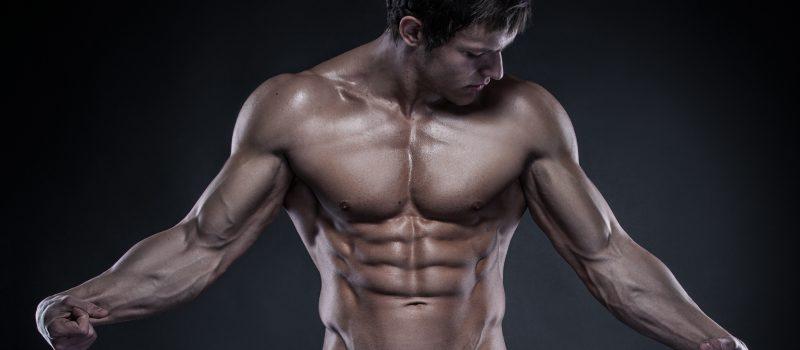 Bodybuilding Articles on Muscular Development